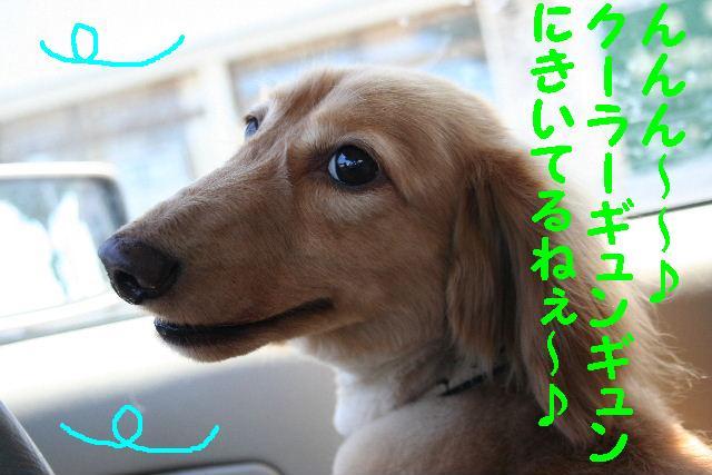 写真少ないじゃん!!_b0130018_13364172.jpg