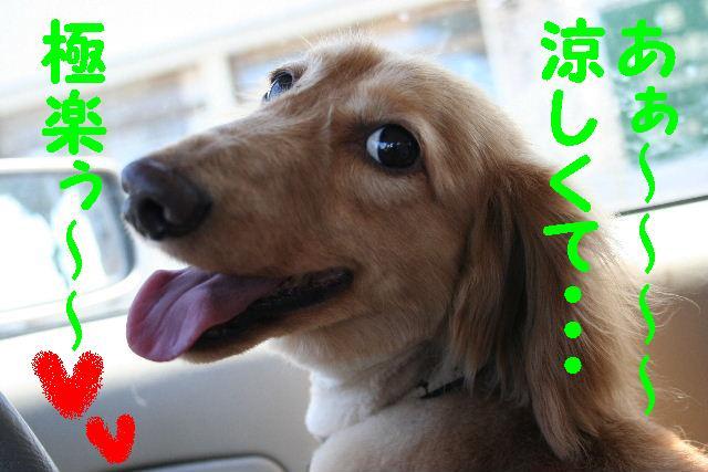 写真少ないじゃん!!_b0130018_13364724.jpg