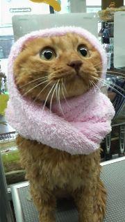 猫のお友だち しぇるくりそつ編。_a0143140_21292080.jpg