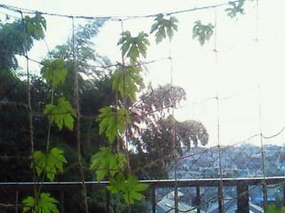 2010.7.30 雨のち晴れ_e0041566_22165156.jpg