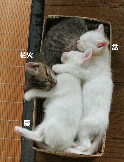 子猫の詰め合わせ&なおさん・いらっしゃい〜♪_d0071596_0113889.jpg