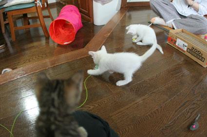 子猫の詰め合わせ&なおさん・いらっしゃい〜♪_d0071596_02951.jpg