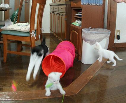 子猫の詰め合わせ&なおさん・いらっしゃい〜♪_d0071596_0295290.jpg