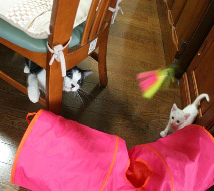 子猫の詰め合わせ&なおさん・いらっしゃい〜♪_d0071596_030372.jpg