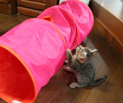 子猫の詰め合わせ&なおさん・いらっしゃい〜♪_d0071596_0305437.jpg