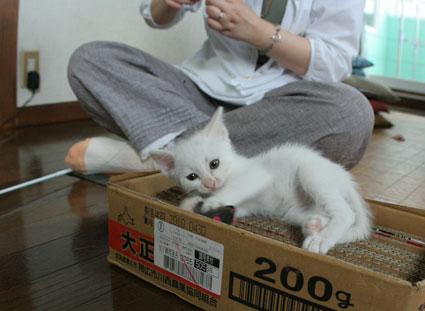 子猫の詰め合わせ&なおさん・いらっしゃい〜♪_d0071596_032847.jpg