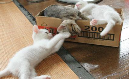 子猫の詰め合わせ&なおさん・いらっしゃい〜♪_d0071596_052155.jpg