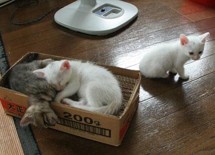 子猫の詰め合わせ&なおさん・いらっしゃい〜♪_d0071596_073696.jpg