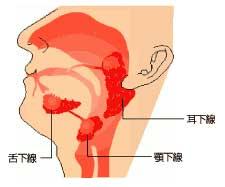 筋繊維痛症・シェーグレン・尿漏れ・その他も薬の副作用?_e0097212_23383868.jpg