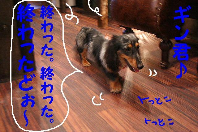 b0130018_99068.jpg