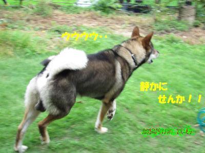 f0143123_20112462.jpg