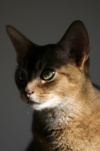 [猫的]Untitled series_e0090124_821493.jpg