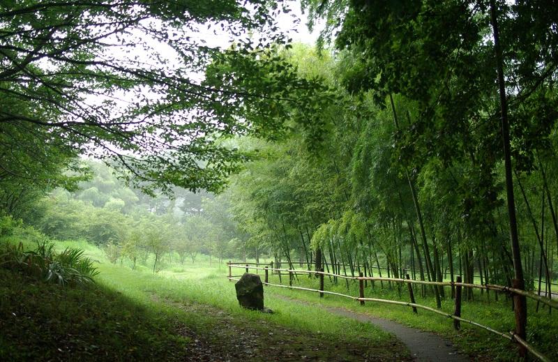 写真  今朝の丘の上の散歩道 _f0214527_15544733.jpg