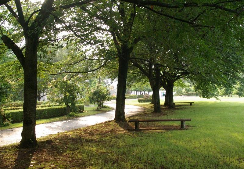 写真  今朝の丘の上の散歩道 _f0214527_155712100.jpg