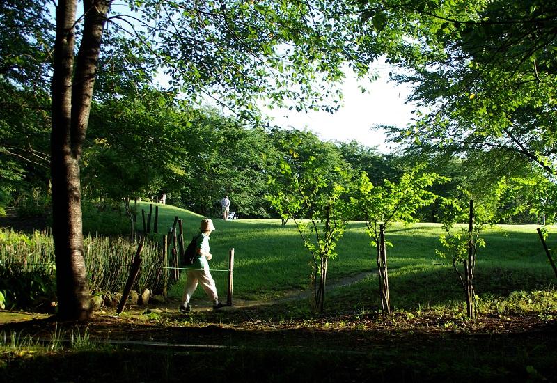 写真  今朝の丘の上の散歩道 _f0214527_1604729.jpg