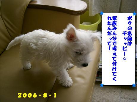 c0212637_4434851.jpg