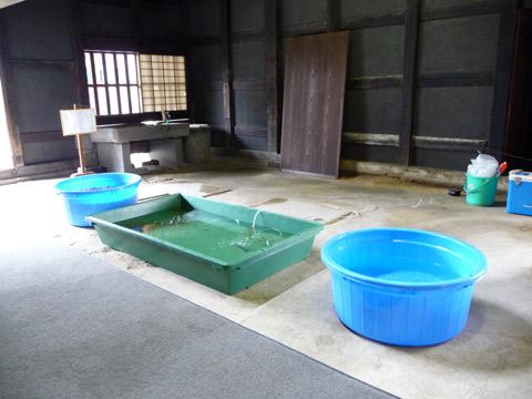 【7月31日(土)】金魚屋さんの日…。_c0221349_180812.jpg