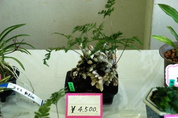 和歌山県植物公園緑花センター _b0093754_0231226.jpg