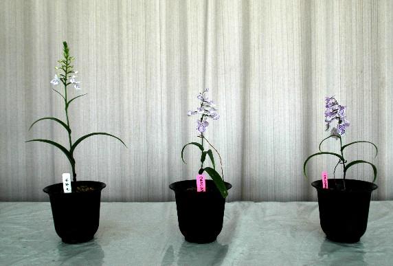 和歌山県植物公園緑花センター _b0093754_023316.jpg