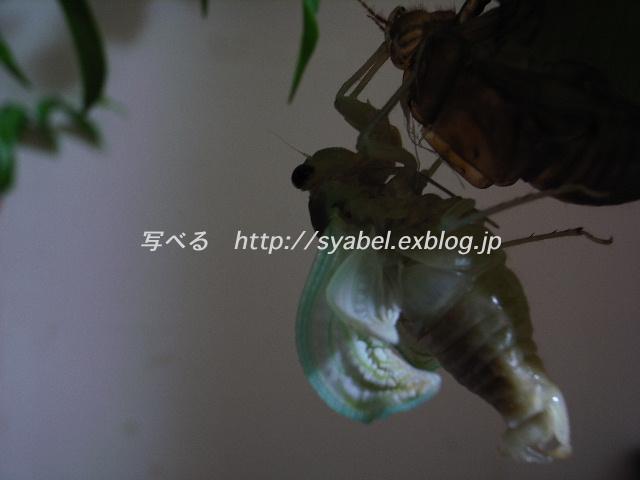 c0153764_90565.jpg