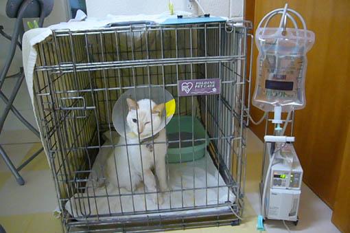 simon is in the hospital._c0153966_19124267.jpg