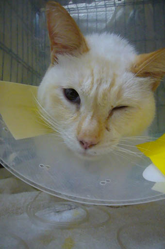 simon is in the hospital._c0153966_1916470.jpg