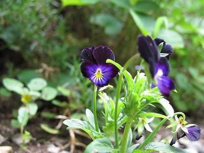 春の花も夏の花も_a0129867_11243940.jpg