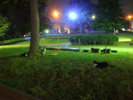 野良猫の復活_e0149596_21533092.jpg