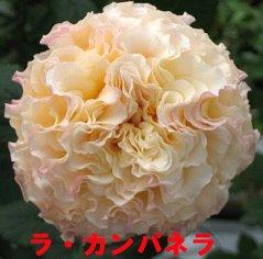 f0054197_2153880.jpg