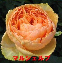 f0054197_2155351.jpg