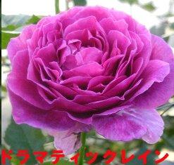 f0054197_2162234.jpg