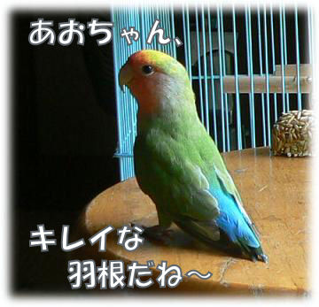 e0014154_1572183.jpg