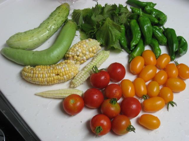初めて採れた野菜など_e0121558_23114550.jpg