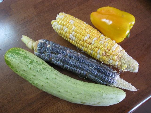 初めて採れた野菜など_e0121558_23123431.jpg