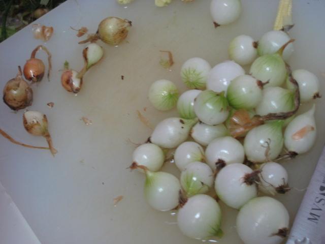 初めて採れた野菜など_e0121558_23124142.jpg