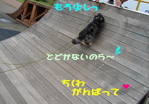 f0195891_20313354.jpg