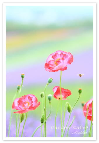 お花畑♪_a0097840_023405.jpg