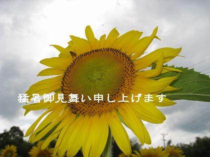 d0172044_20594528.jpg