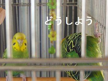 f0196665_030020.jpg