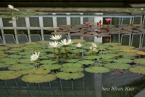 植物園の桜林_a0164068_1646595.jpg
