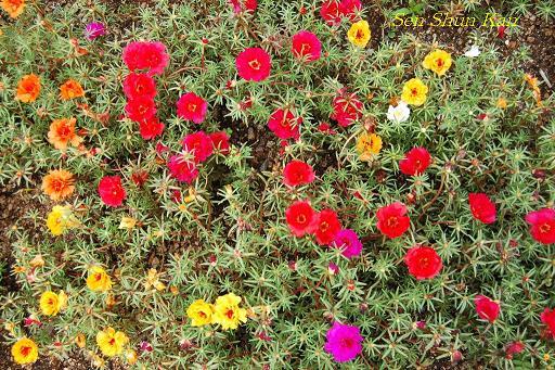 植物園の桜林_a0164068_16475450.jpg
