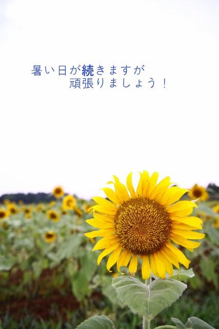 f0081688_858450.jpg
