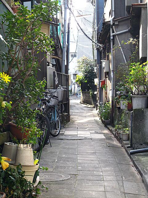 古川(渋谷川)白金三光町支流・再訪_c0163001_23324611.jpg