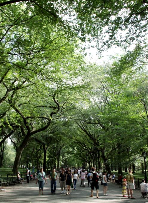 夏のセントラルパーク風景_b0007805_0302868.jpg