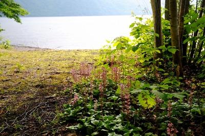 北海道の旅1「支笏湖湖畔の苔の洞門」_a0148206_16381283.jpg