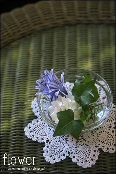 テーブルの花_f0100215_210479.jpg