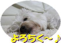 f0084422_2364852.jpg