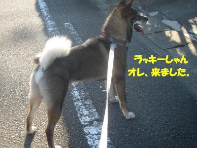 f0143123_20121399.jpg