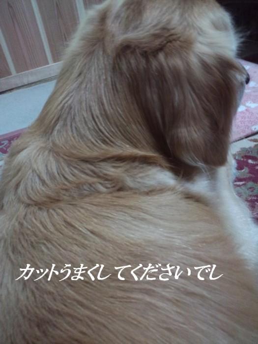 b0127531_1351520.jpg