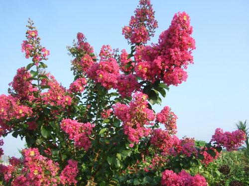 サルすべりの花は....赤、白、ピンク!_b0137932_22353071.jpg